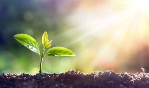 筋トレのメリットを5年やった僕が紹介します 育つ植物